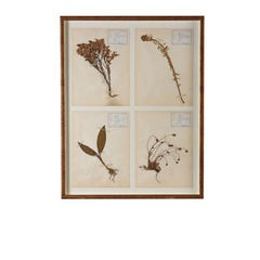 Framed Pressed Herbiers