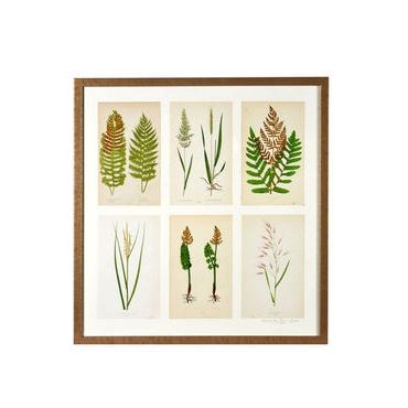 Ferns and Grasses Framed